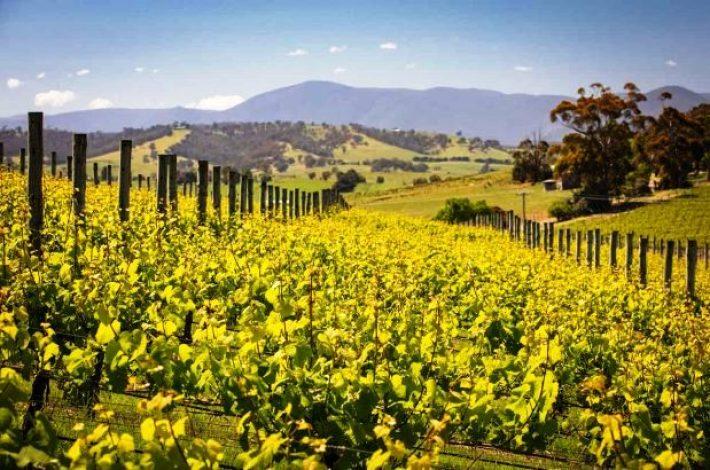 Vinhas de Chardonnay na Austrália