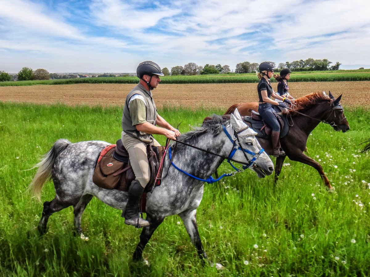 Balade à cheval en Alsace