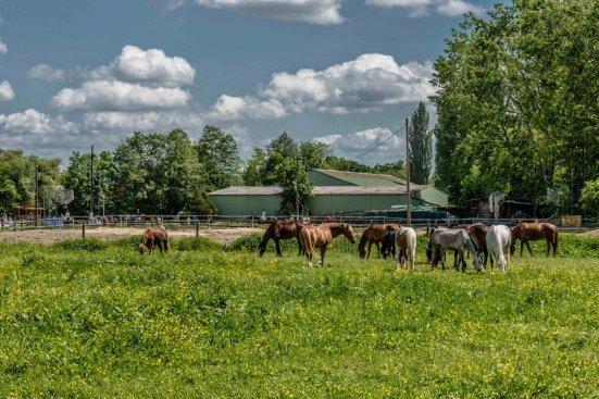 Poneys au pré à Eckbolsheim