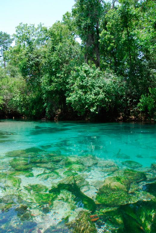 Weeki Wachee River Report  Green Wave Forum