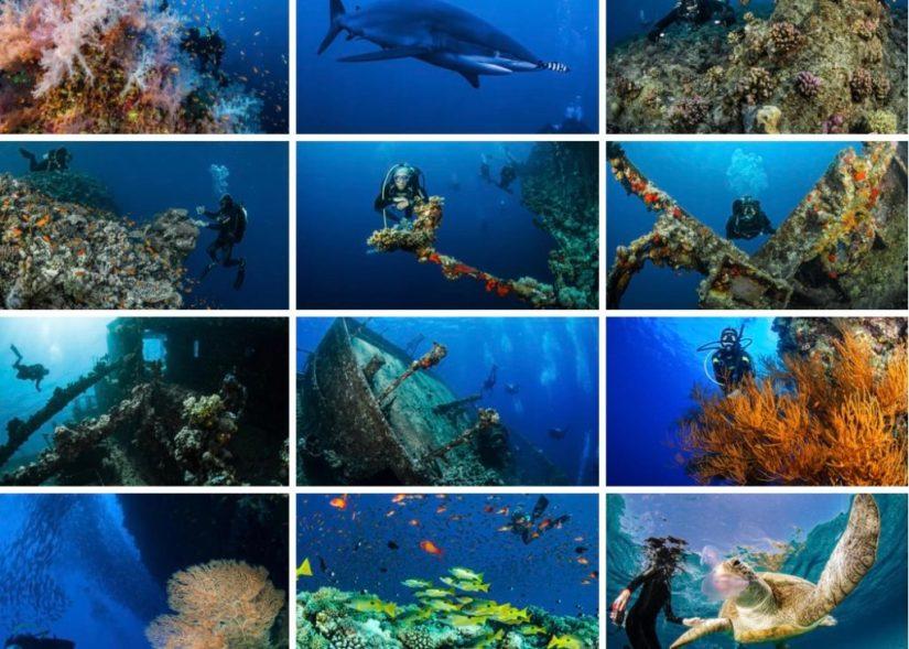 Insieme di foto subacquee