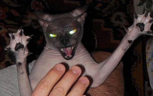 the eveil cat