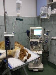 sedinta-de-hemodializa