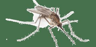combaterea şi limitarea efectelor infestaţiei cu ţânţari