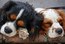 Câini Fără Stăpâni