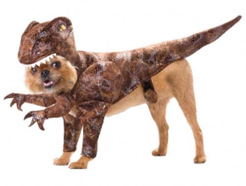 dog halloween costume raptor dinosaur