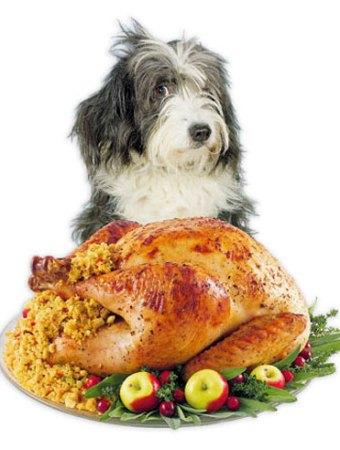 Thanksgiving dog turkey