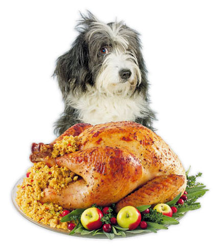 Thanksgiving dog turkey