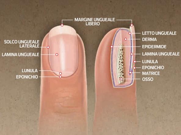 le unghie