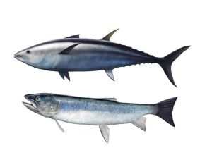 Tonno e Salmone omega 3