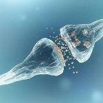 cervello artificiale Sinapsi neurali