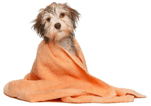 Grooming and Dog Welfare Services