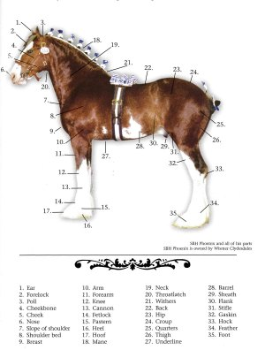 Clydesdale Breeders of the USA Frequently Asked Questions  Clydesdale Breeders of the USA