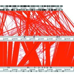 figure2 bordetella pertussis the intersection of genomics and pathobiology cmaj [ 1280 x 960 Pixel ]