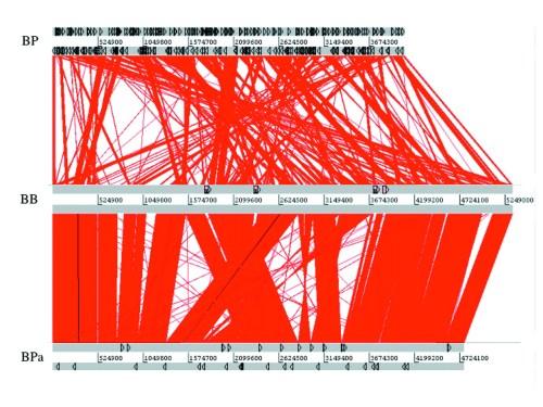 small resolution of figure2 bordetella pertussis the intersection of genomics and pathobiology cmaj