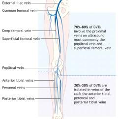 Leg Venous Diagram 7 Pin Rv Plug Wiring Diagnosis And Treatment Of Deep-vein Thrombosis | Cmaj