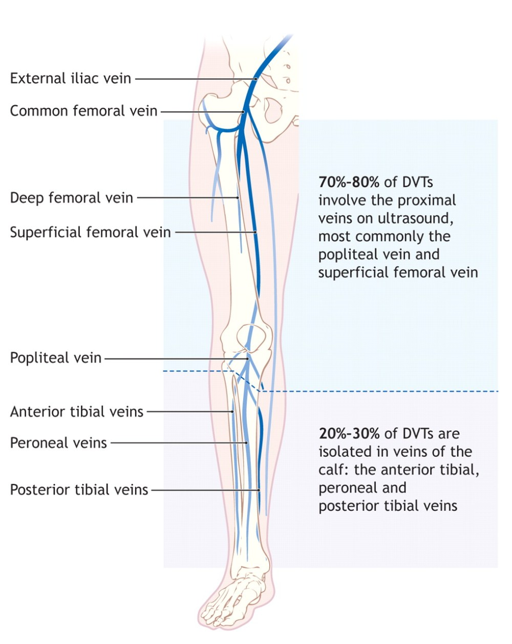 medium resolution of leg vein diagram data wiring diagram right leg vein diagram leg vein diagram