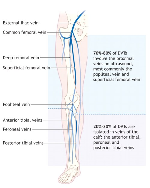 small resolution of leg vein diagram data wiring diagram right leg vein diagram leg vein diagram