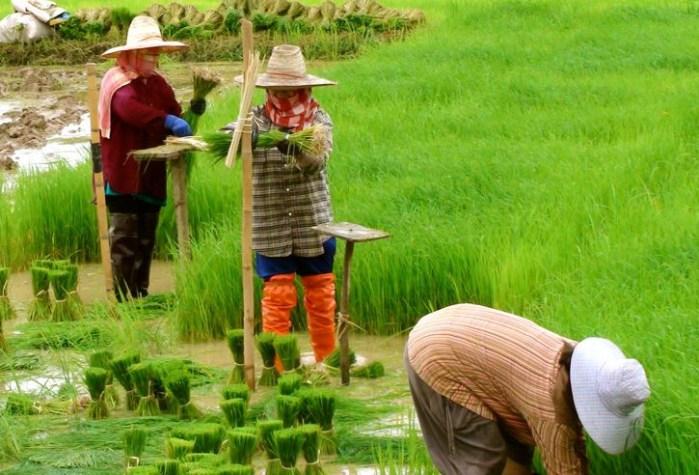 Volunteer Visa Chiang Mai