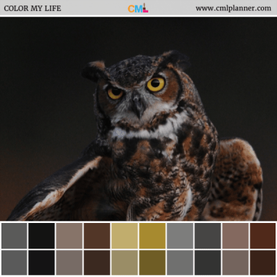 Wise Choice - Color Inspiration from Color My Life