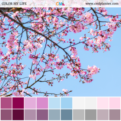 Cherry Blossoms - Color Inspiration from Color My Life