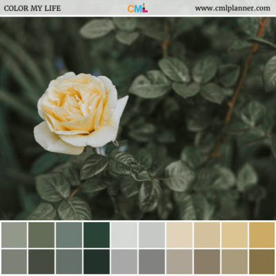 White Rose - Color Inspiration from Color My Life