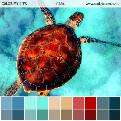 Sea Turtle - Color Inspiration from Color My Life