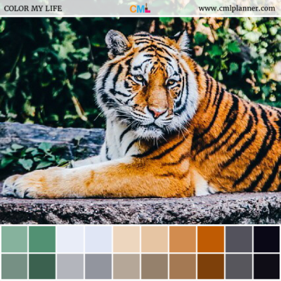 Tiger - Color Inspiration from Color My Life