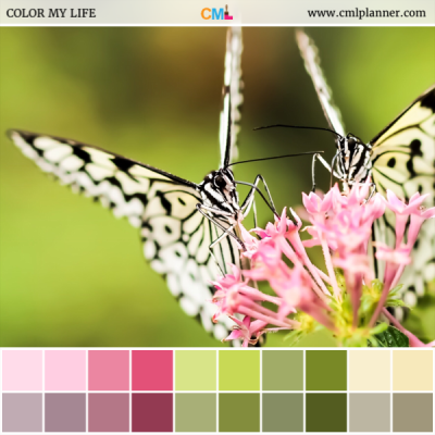Butterfly Garden - Color Inspiration from Color My Life