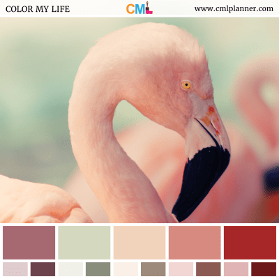 Flamingo Blush - Color Inspiration from Color My Life