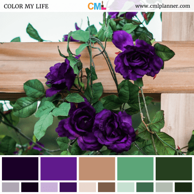 Violet Vine - Color Inspiration from Color My Life