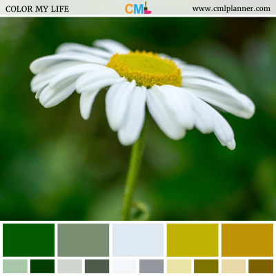 Color Palette #061618 - Color Inspiration from Color My Life