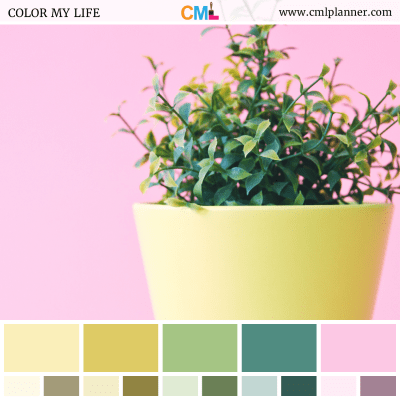Color Palette #062918 - Color Inspiration from Color My Life