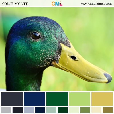 Color Palette #072318 - Color Inspiration from Color My Life