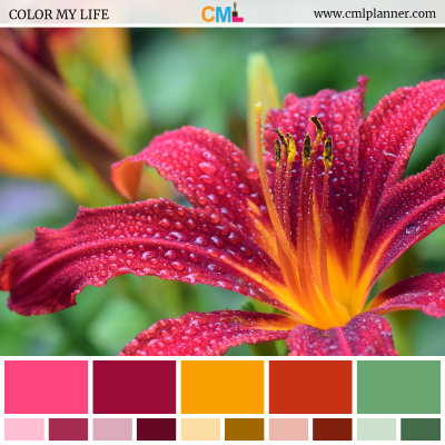 Color Palette #072618 - Color Inspiration from Color My Life