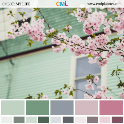 Color Palette #081518 - Color Inspiration from Color My Life
