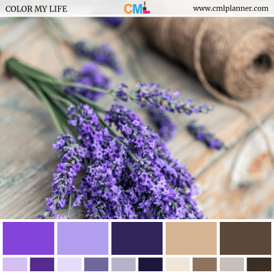 Color Palette #081818 - Color Inspiration from Color My Life