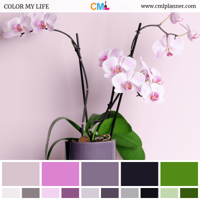 Color Palette #082518 - Color Inspiration from Color My Life