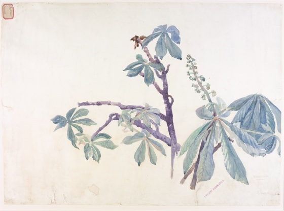 Watercolor of Chestnut leaves by Alice Gouvy for Tiffany. Bib. #88922