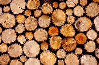 What is the Best Type of Wood to Burn in Your Fireplace ...