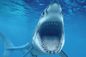 Shark Mouth Open