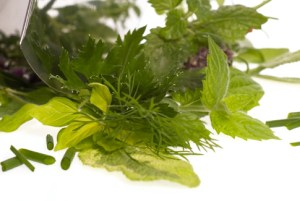 Herbs used for Obesity