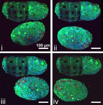 heart-cells-lfigure4-900x922.jpg