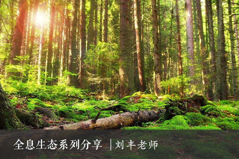全息生态意识引领生态实践 - 全息农法系列(一)