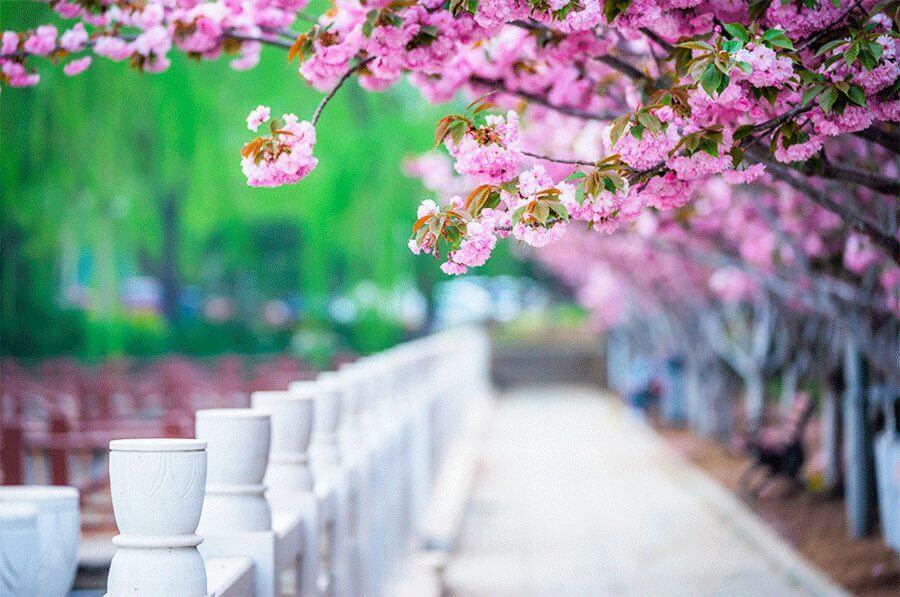 刘丰老师:付出是生命的第一需要