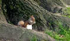Un écureuil en plein déjeuner !