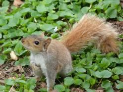 Vous n'aurez aucun mal à approcher les écureuils de Central Park
