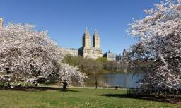 Printemps dans Central Park