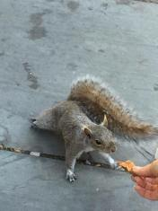 Un écureuil intéressé... (Photo Sonia Guillemet)