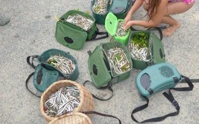La pêche aux lançons, 23 août 2017